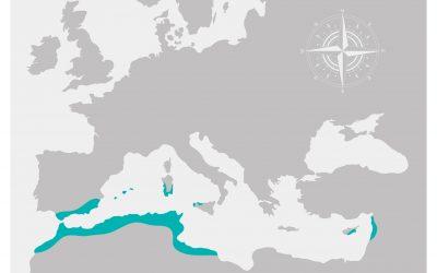 I Fenici, un popolo di commercianti e inventori!