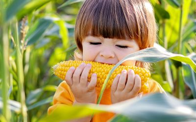 Historie żywności: kukurydza